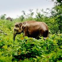 V zemi slonů, skořice...