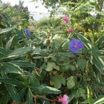 Zahrada ve stylu Azurového pobřeží
