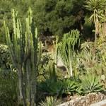 Gibraltar - Alameda Botanic Garden
