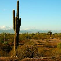 Věšák z Arizony