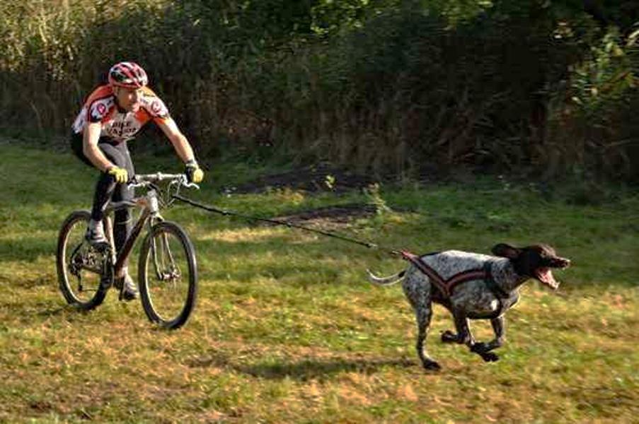 Zábava pro psa - agility a bikejöring