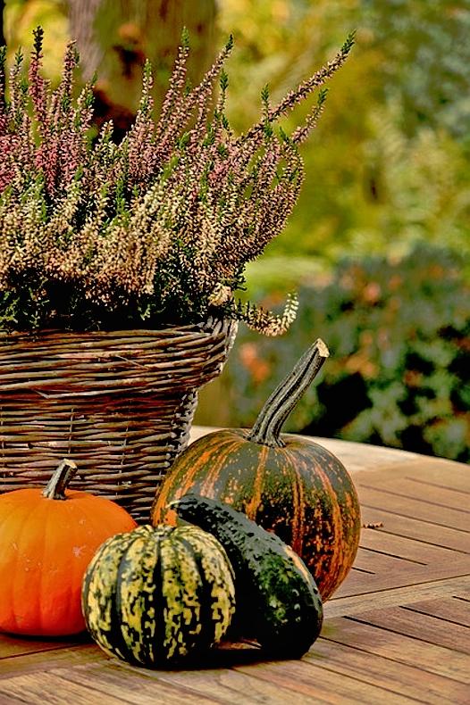 Podzimní aranžmá - vřesovec a okrasné tykve