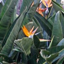 Fotoeditorial - rajský květ