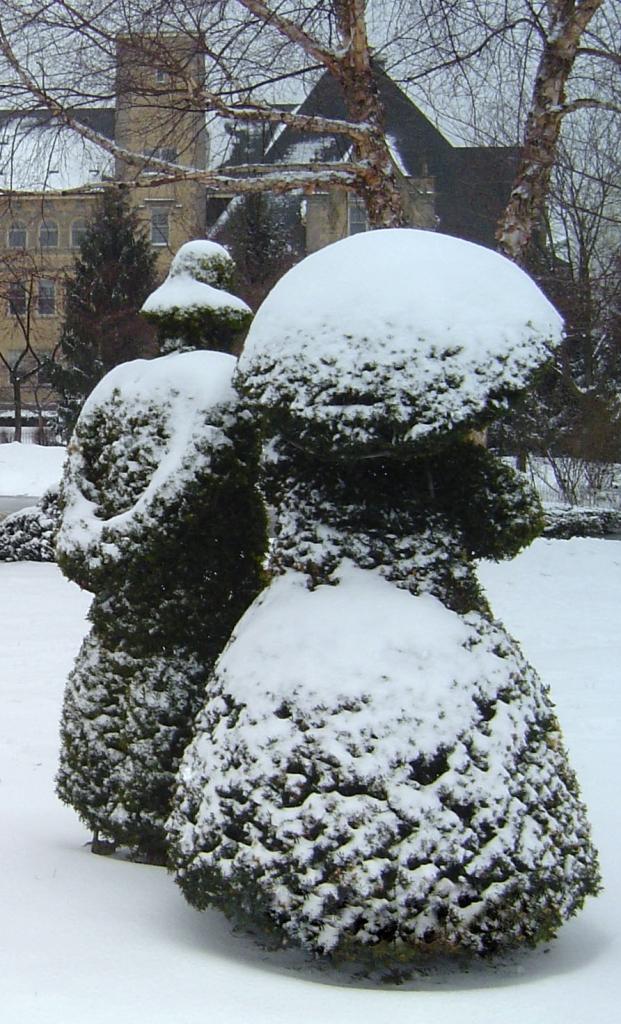 topiary_zima