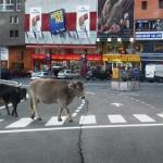 Fotoeditorial Andorra