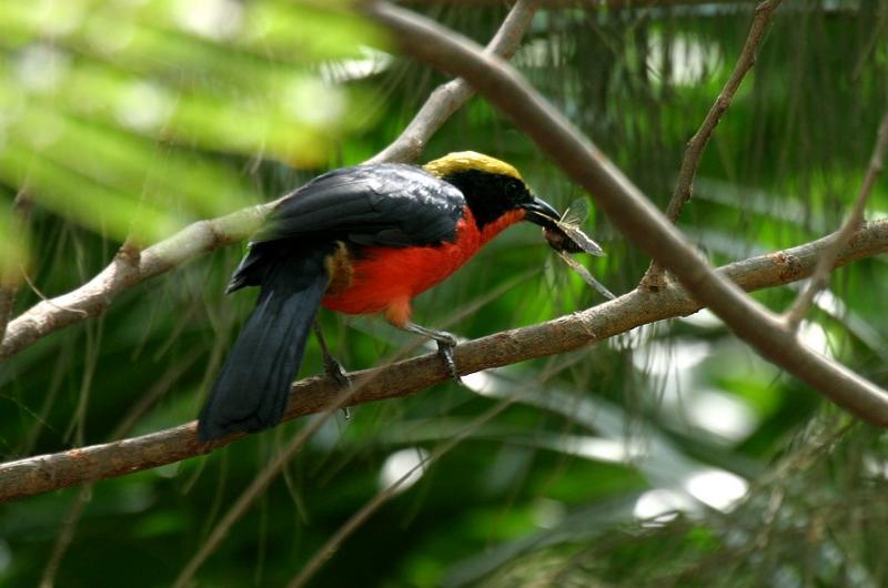Agentury i místní soukromí průvodci pořádají dvoudenní výlety do rezervace. Některé jsou vyloženě zaměřeny na pozorování ptáků.