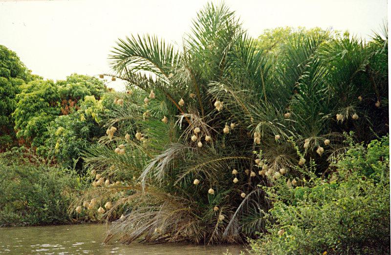 Necelých deset km jižně od Banjulu leží přírodní rezervace Abuko, ve které mohou turisté pozorovat krokodýly, opice, antilopy a ptáky. Tato oblast je proslulá i díky nejkrásnějším plážím Afriky.